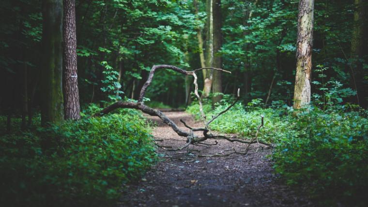 深い森のイメージ